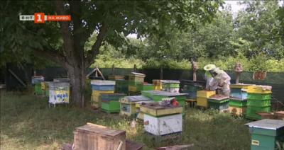 Интелигентни кошери ще спасяват пчелите у нас от изчезване