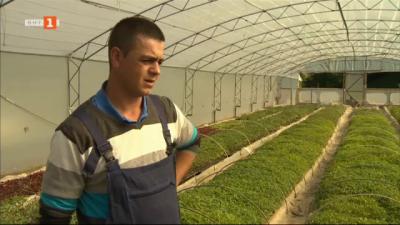 Мини завод за разсад в Родопите