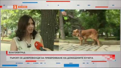 Търсят се доброволци за преброяване на домашните кучета