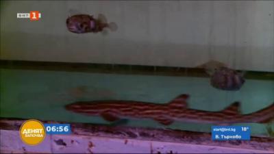 Две акули загинаха в Пловдив заради тесен аквариум