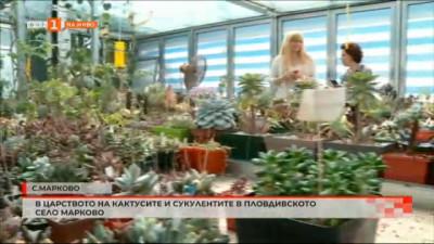 В царството на кактусите и сукулентите в село Марково