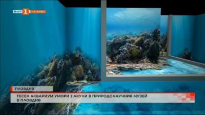 Тесен аквариум причина смъртта на две акули в Природонаучния музей в Пловдив