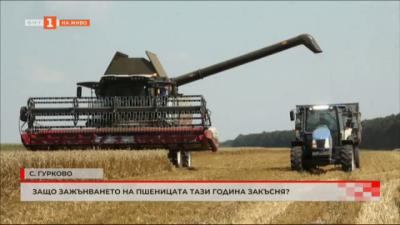 Защо зажънването на пшеница в Добруджа закъснява?
