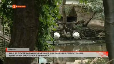 Над 20 пострадали щъркела са настанени в спасителния център на зоопарка във Варна