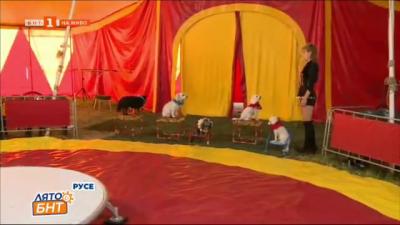 Атракции и изненади очакват русенци под шапитото на цирка