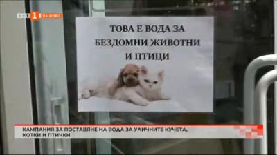 Кампания за поставяне на вода за уличните котки, кучета и птички
