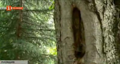 Как се проверява дали едно дърво е здраво и безопасно