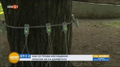 Как чрез новите технологии се изследва състоянието на дърветата
