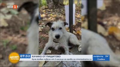 Куче от Пищигово повече от два месеца пази гроба на своята стопанка