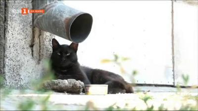 Лятна кампания на България в 60 минути: Да оставим купички с вода за бездомните животни