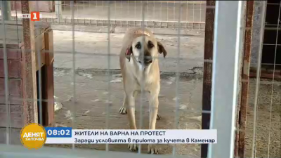 Природозащитници на протест срещу условията в приюта за кучета в Каменар
