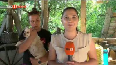 Нарастват ли проблемите с бездомните кучета и кой трябва да поеме отговорност за тях?