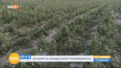 След градушката в Пловдивско: 64 хектара реколта е унищожена напълно