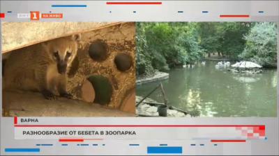 Разнообразие от бебета в зоопарка във Варна