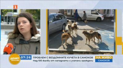 Проблем с бездомните кучета в Самоков. Над 100 жалби от нападнати и ухапани граждани
