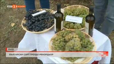 Български сорт грозде - рекордьор