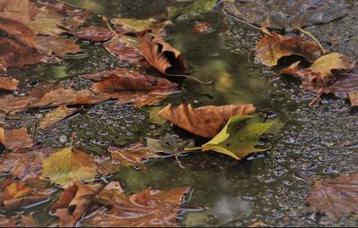 Минутата на синоптика: Проливни валежи от дъжд днес