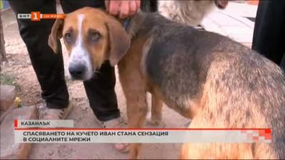 Спасяването на кучето Иван стана сензация в социалните мрежи