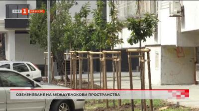 Инициатива за озеленяване на междублоковите пространства