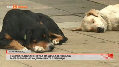 Общината в Благоевград набира доброволци за преброяване и регистриране на домашните любимци