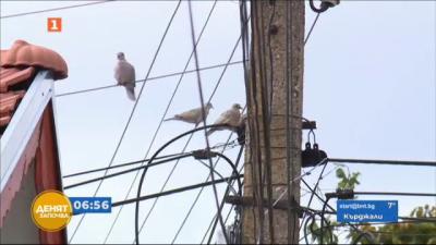 Режим и токови удари са ежедневие в Глоджево и още три села