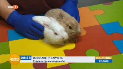 Изоставени зайчета търсят приемни домове
