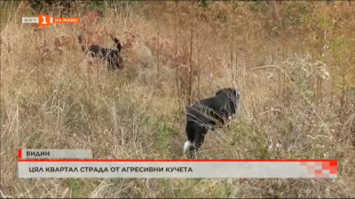 Подписка срещу агресивни бездомни кучета във Видин