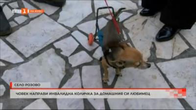 Как стопанин направи инвалидна количка за кучето си