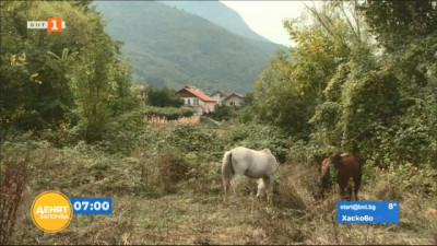 Двоен скок в цените на имотите в село Бистрица