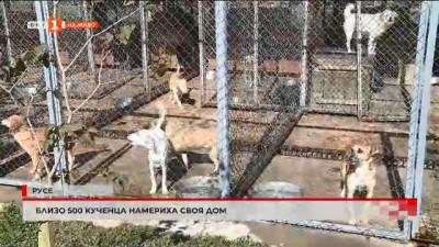 В Русе близо 500 кученца намериха своя дом