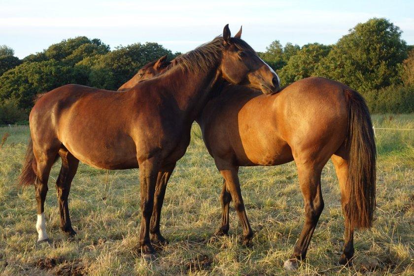 Извадиха конете от списъка със селскостопанските животни - какви са последствията?