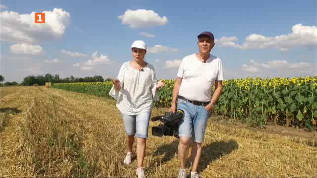"""Най-доброто от """"Бразди"""": Картофи, отглеждани със сателит"""