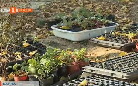 Как да отгледаме домашни зеленчуци в града
