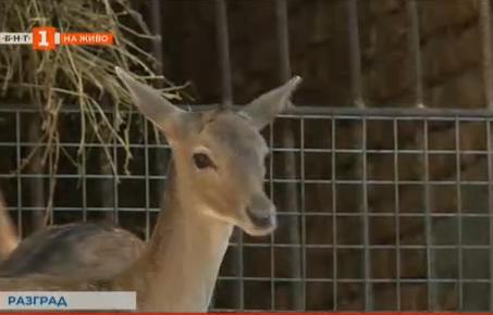 Търсят се имена за малки еленчета от разградския зоопарк