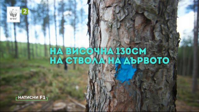 """Как да подадете сигнал чрез приложението """"Спаси гората""""?"""
