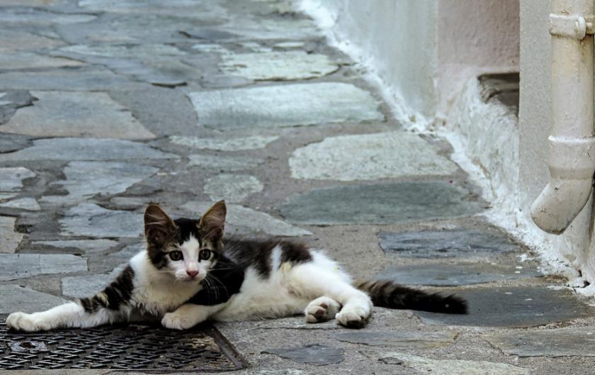 Увеличават се популациите на уличите животни