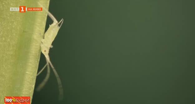 Нашествието на буболечките