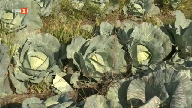 Търговия с български зеленчуци в Калековец