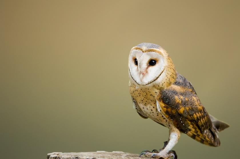 Какво да направим, ако намерим бедстваща дива птица?