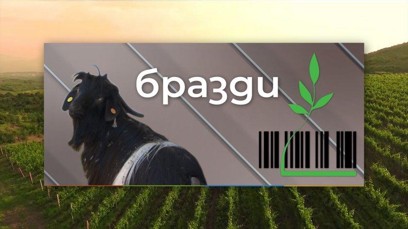 На границата между хоби животновъдството и професионалното фермерство - 16.01.2021