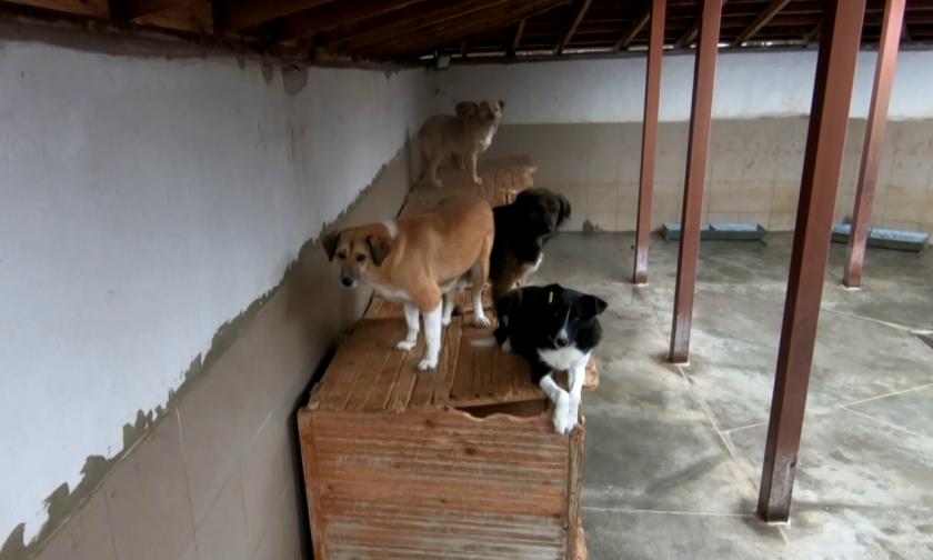 """Как се грижат за животните в общинския приют """"Приятел завинаги"""" в Пловдив"""