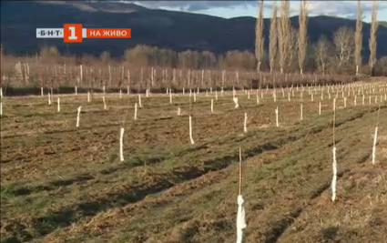 Време е за подрязването и оформянето на плодните дървета. Как се прави?