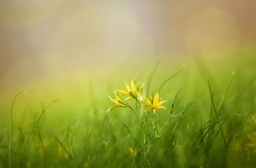 Електронна игра помага да научим повече за растенията