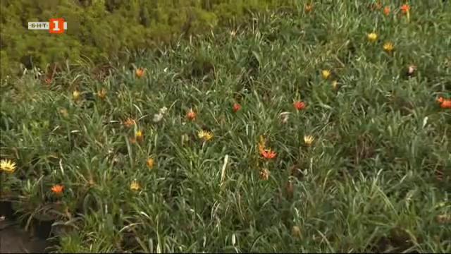Декоративните растения - земеделският сектор, който носи красота и здраве на хората