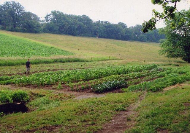 Защо зеленчукова ферма в Нигерия се нарича Свищов
