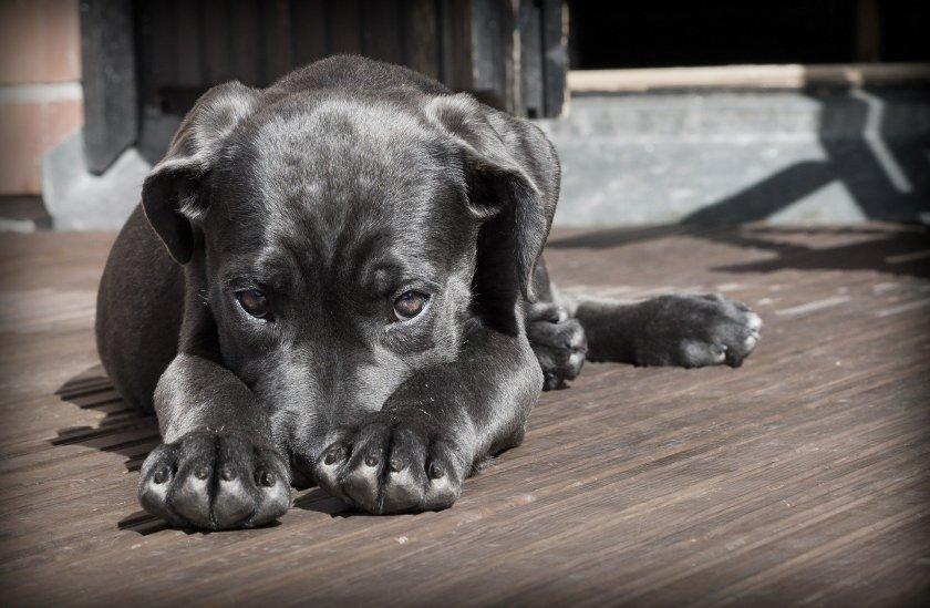 След пореден сигнал за хвърлена отрова - как да действаме, ако кучето ни се е натровило?
