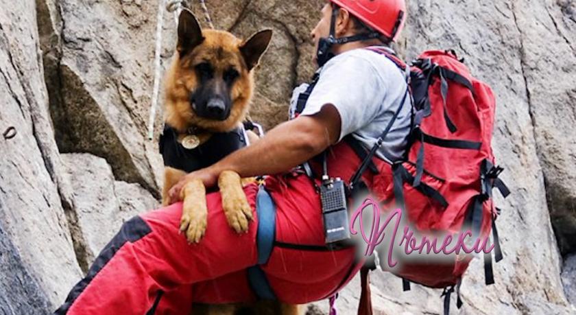 Мобилно приложение за помощ на животни в беда