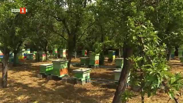 Семейство пчелари със собствен пчелин