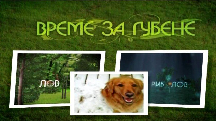"""Какво представлява """"концептуалното обучение"""" на кучета"""