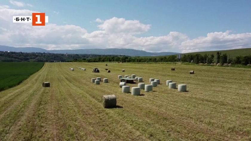Ще бъдат ли забранени пестицидите в Швейцария?